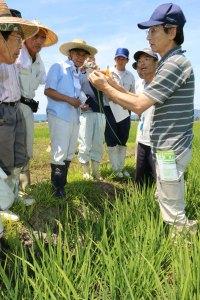 稲の栄養診断方法などを確認する参加者