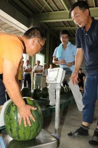 大きく生長したスイカを一つ一つはかりに載せて計測する部会員